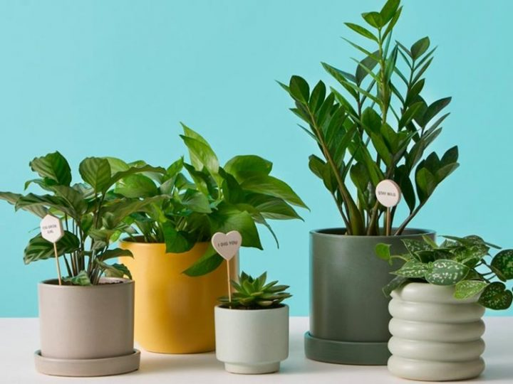 Why should you go for plant delivery in Singapore?